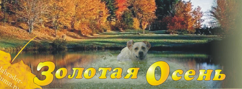 фото золотая осень